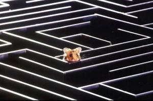 Soris perdue dans un labyrinthe Gestalt Psychothérapie Paris 15